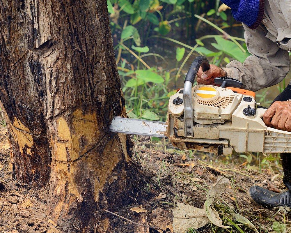 Tree Service Carmel - Tree Removal