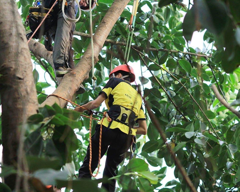 Tree Service Carmel - Emergency Tree Removal