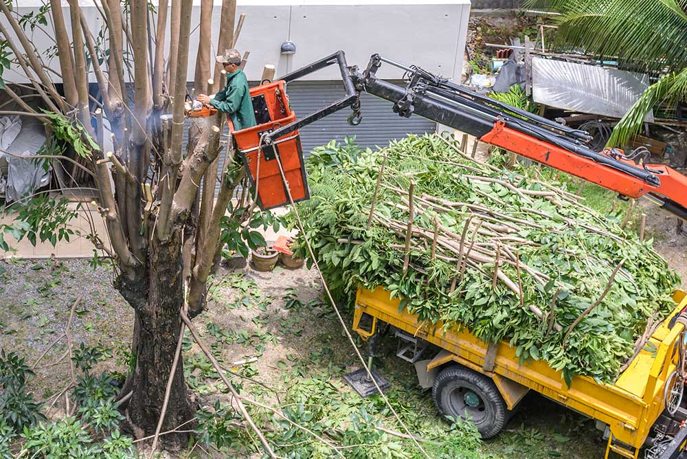 Santa Cruz Tree Service Experts
