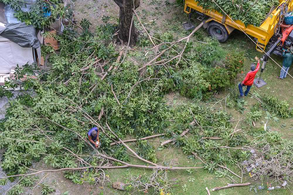 Tree Service Carmel - Tree Trimming